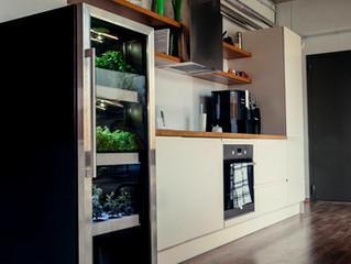 Городской огород -пряные травы на каждой кухне