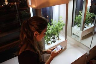 Семинар  «Особенности выращивания многолетних трав в закрытых системах  и домашних условиях»