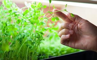 Семинар «Правила и способы выращивания Микрозелени»