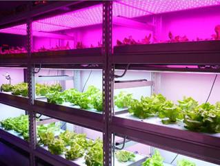 Профессиональные фито лампы растений, автоматизированные системы для теплиц.