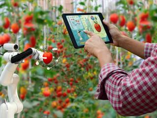 Конференция «Продовольственная безопасность, развитие Российского закрытого растениеводства, ситифер