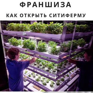 Дистанционное сити-фермерство— бизнес, который выиграл отпандемии коронавируса