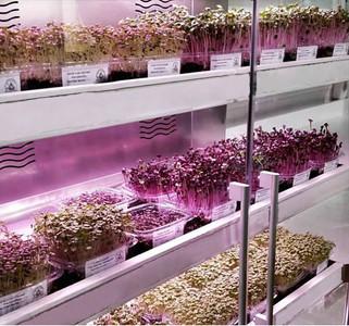 Новые витрины для выращивания микрозелени
