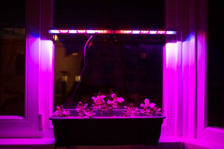 Профессиональные лампы подсветки растений, автоматизированные системы для теплиц.