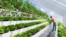 Рентабельность  зимнего тепличного хозяйства