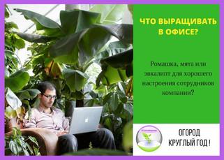 Зеленый офис вкусно и полезно!