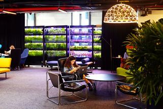 GREENBAR- это витрина 21 века в ней не просто хранится свежая зелени, она в ней растет!