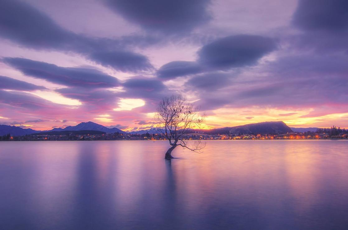 Wanaka Lone Tree