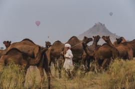 Camel keeper