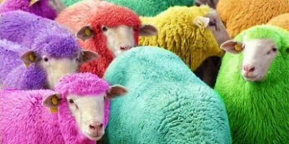 International Back-to-Back Wool Challenge!