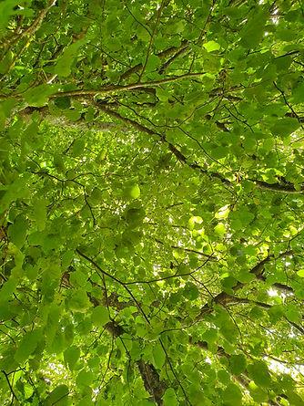 Orchard 3.jpg