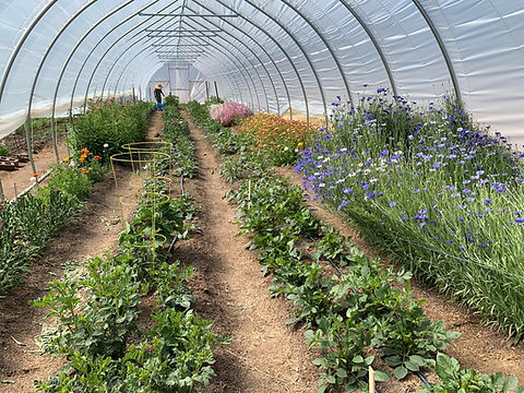farmTunnel.jpg