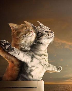 CATS .jpg