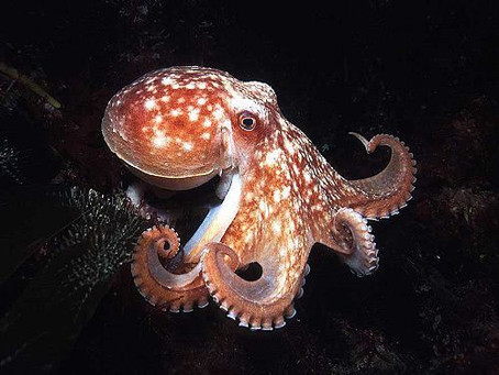 LEARN ABOUT OCTOPUS