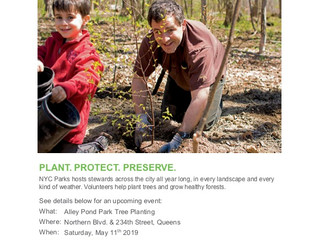 Volunteer with the NYC Parks Stewardship Program