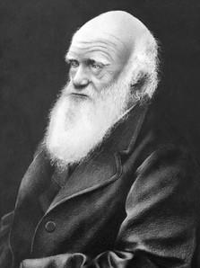 Darwin Fernando Couto de Magalhães