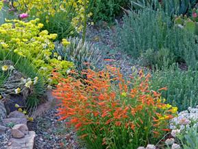 Penstemon: Royalty of Our Western Wildflowers