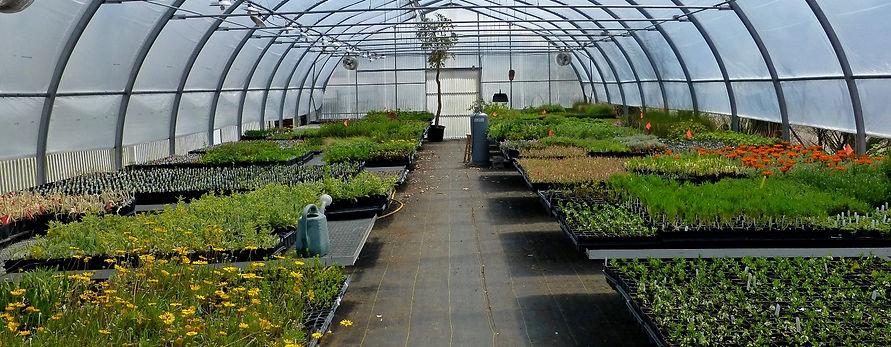 WWG greenhouse March 2017 (1)_edited.jpg