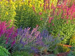The Tall Grandeur of The Late Season Garden