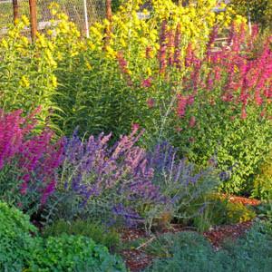 Xeriscape Garden in September