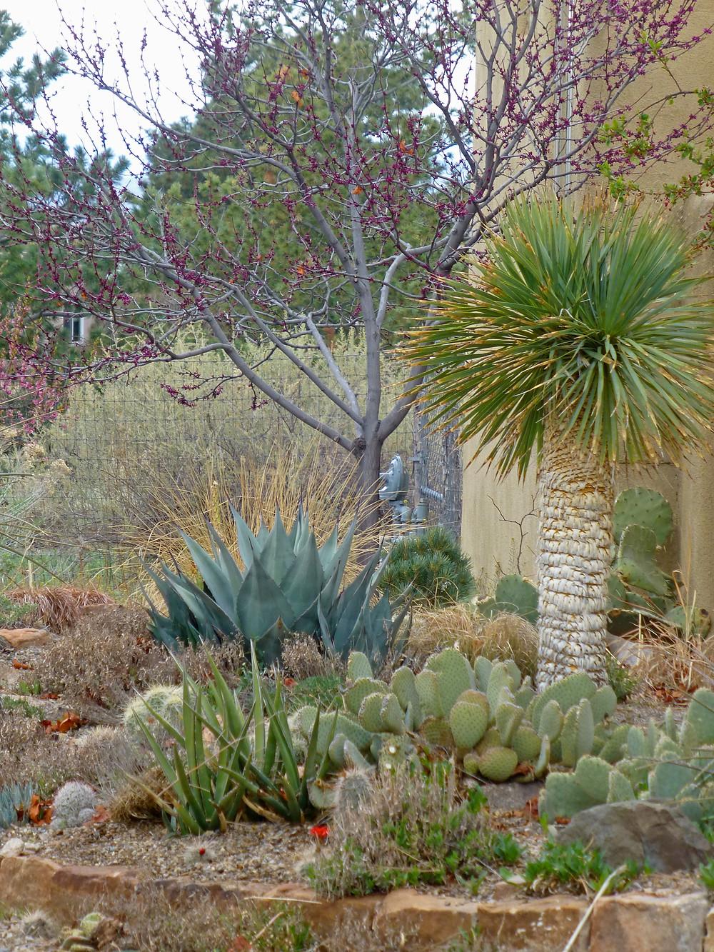 Santa Fe evergreen succulent garden