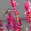 pollinator-plant5.png