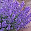 pollinator-plant1.png