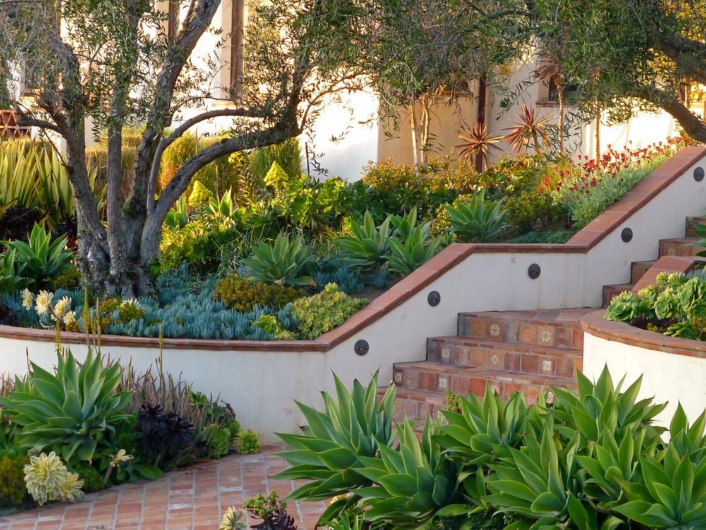 California succulent garden