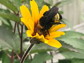 10 Tips for Making Your Garden a Sanctuary for Pollinators
