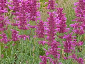 Top Ten Natural Nectar Plants