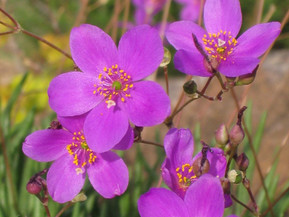 6 Late Summer Flowering Plant Combos
