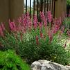pollinator-plant2.png