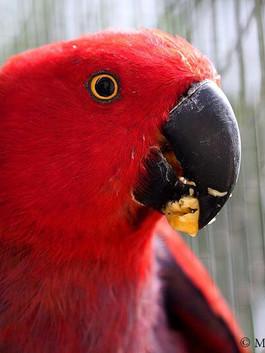 After_birds_5.jpg