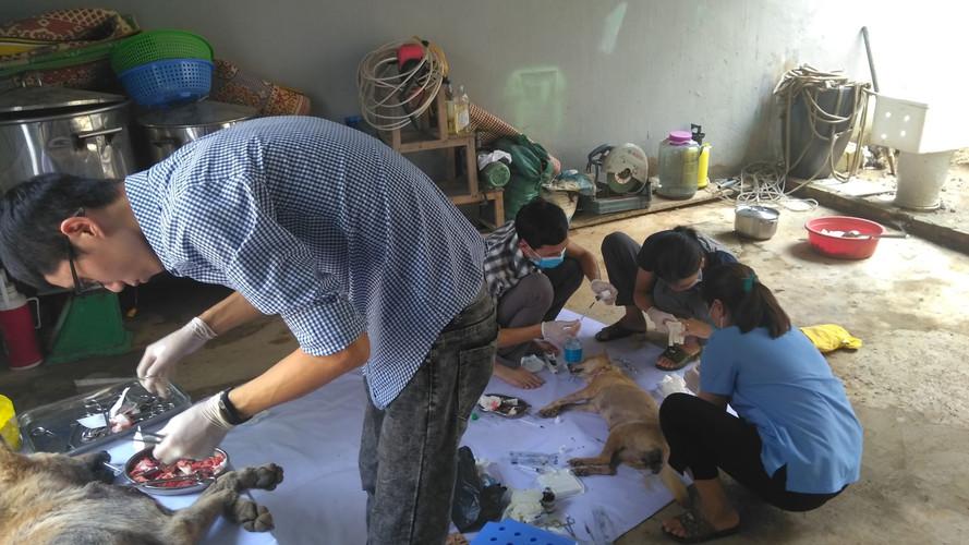 điều trị cho đàn chó đang được CSĐT tạm
