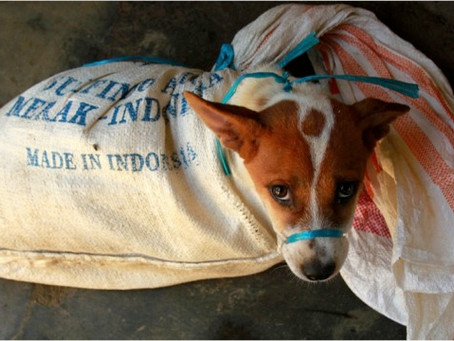 Why Giving up on Indonesia's Dogs is Not an Option