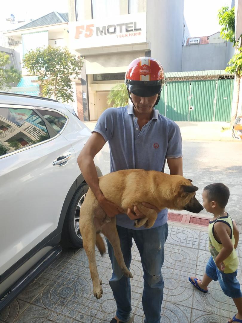 Một số chó đã được chủ nuôi nhận diện và