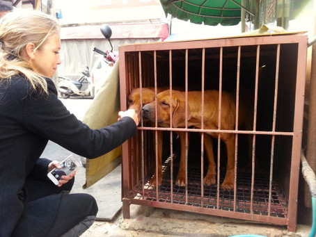 Ending the Dog Meat Industry in South Korea: A Journey of a Million Tears