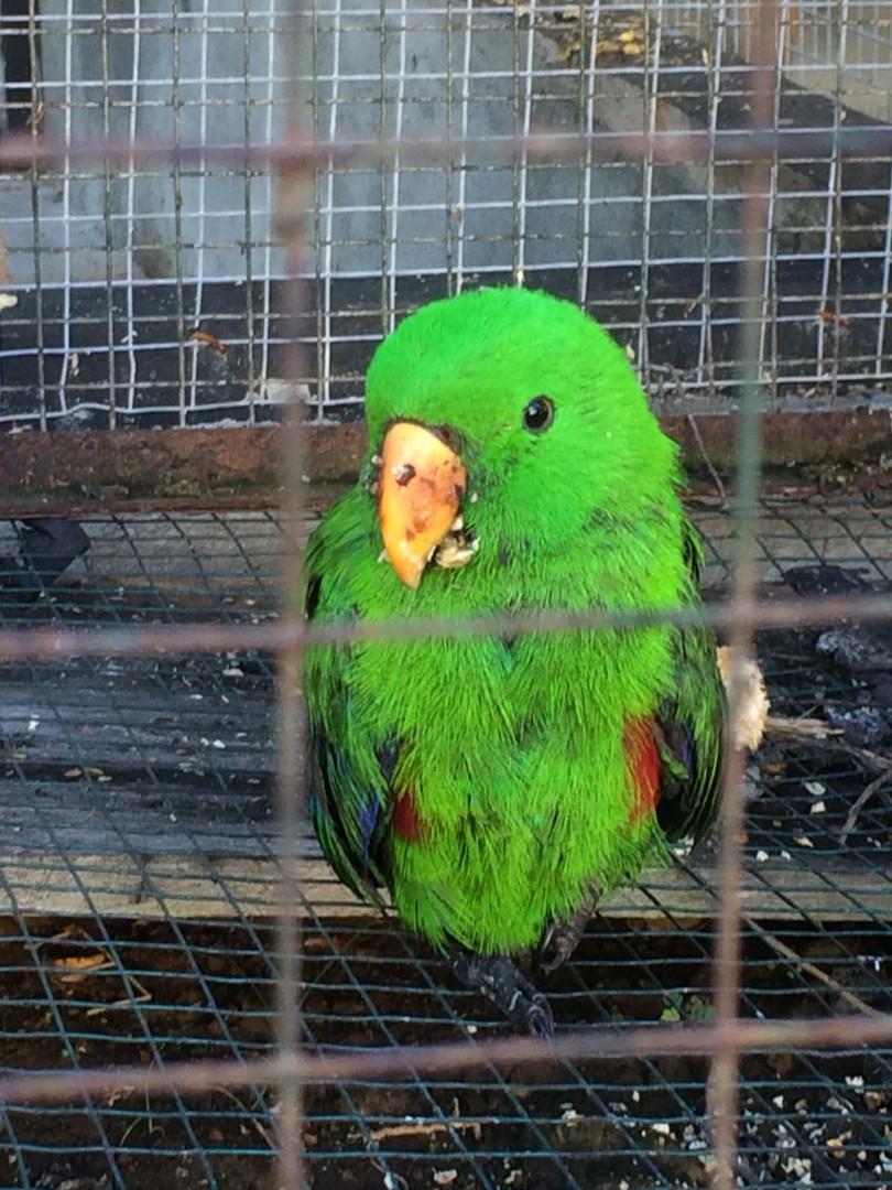 Before_birds_2.jpg