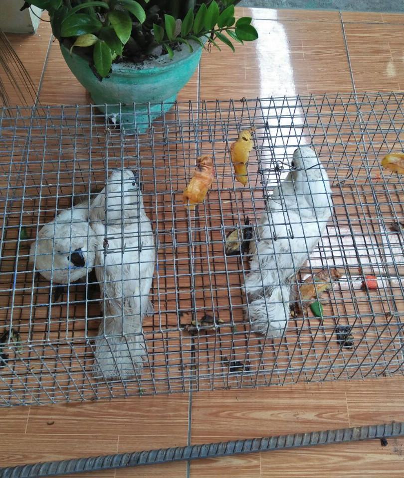 Before_Birds_1.jpg