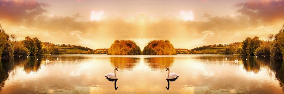 Fotolia_#50254822_©_astar321_-_Swan_Lake