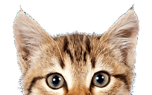 1-2_tabbycat_375x362_f4ff1471-ace4-4e7e-