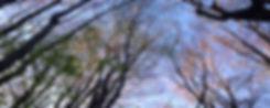 A-Trees-So.beautiful-2.jpg