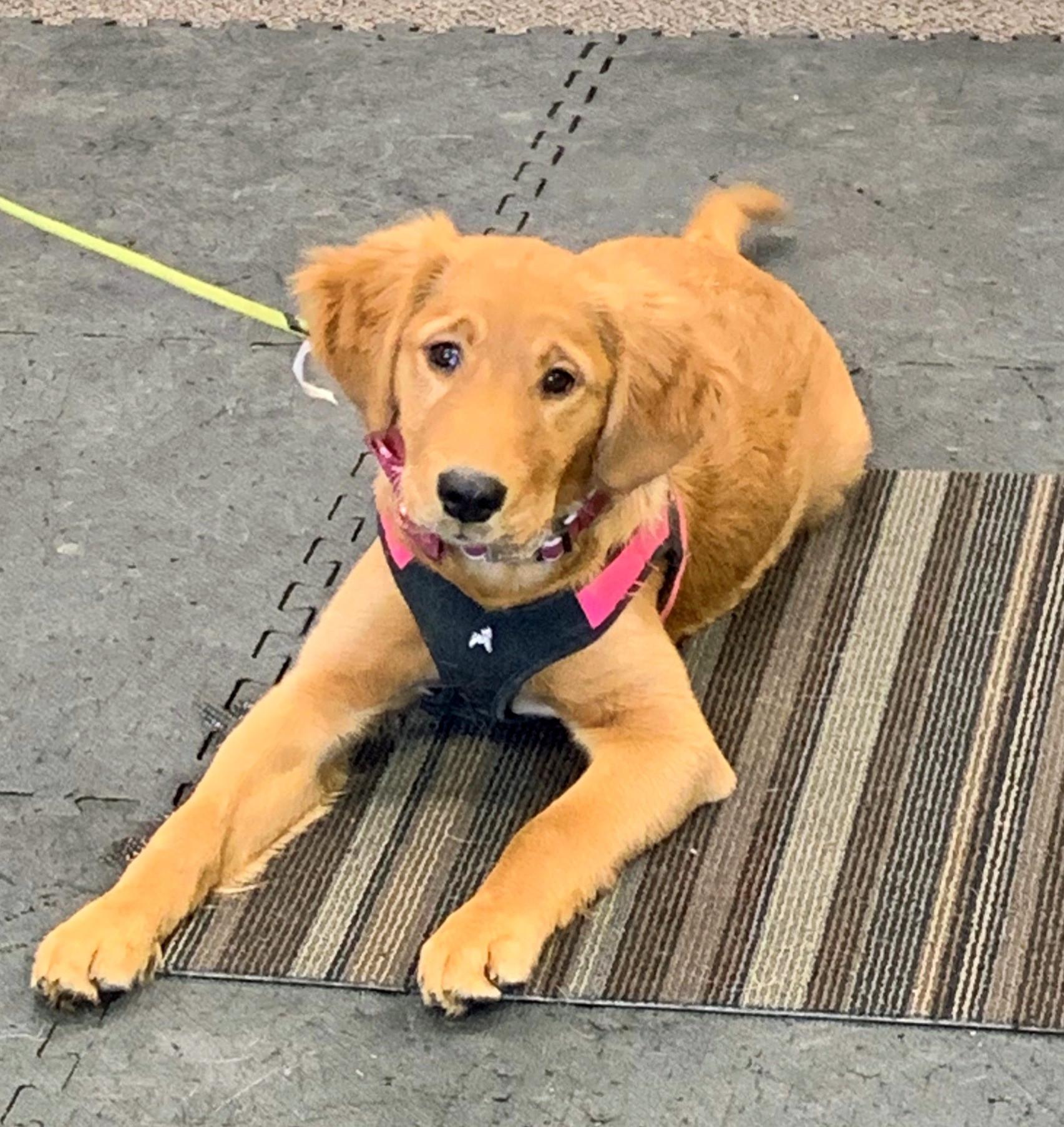 Puppy Manners - Mondays