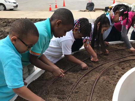 School Learning Gardens