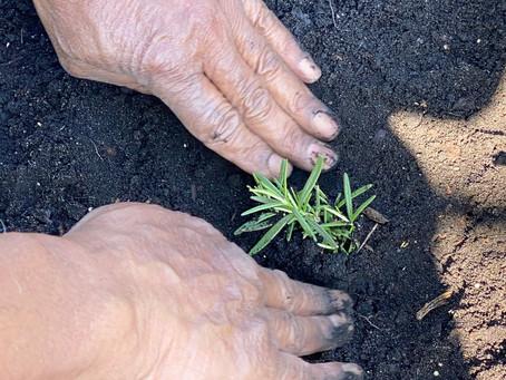 Three Generations Planting an Herb Garden