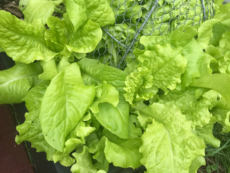 Lettuce Make Some Dishes