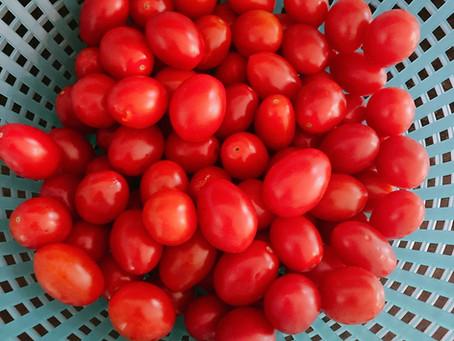 Freezing Cherry Tomatoes