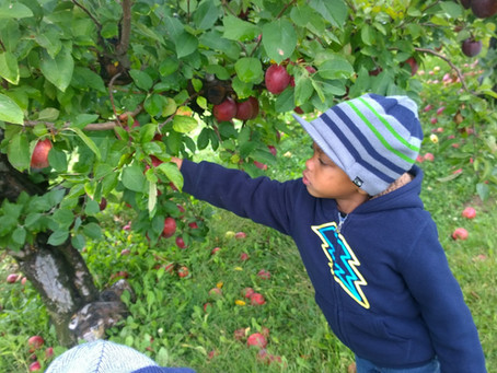 Apple Picking at Stuckey Farm