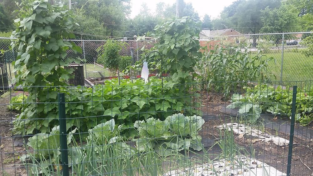 James Stockton's Garden Summer 2016