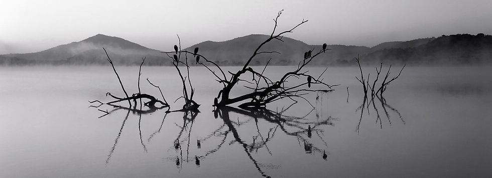 Trees in Lake_edited.jpg